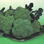 Broccoli - Premium Crop - Organic