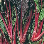 Swiss Chard - Burgundy