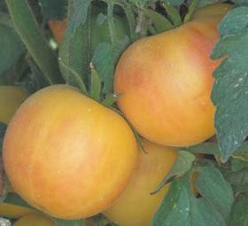 Heirloom Tomatoes - Garden Peach