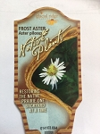 Aster pilosus - Frost Aster