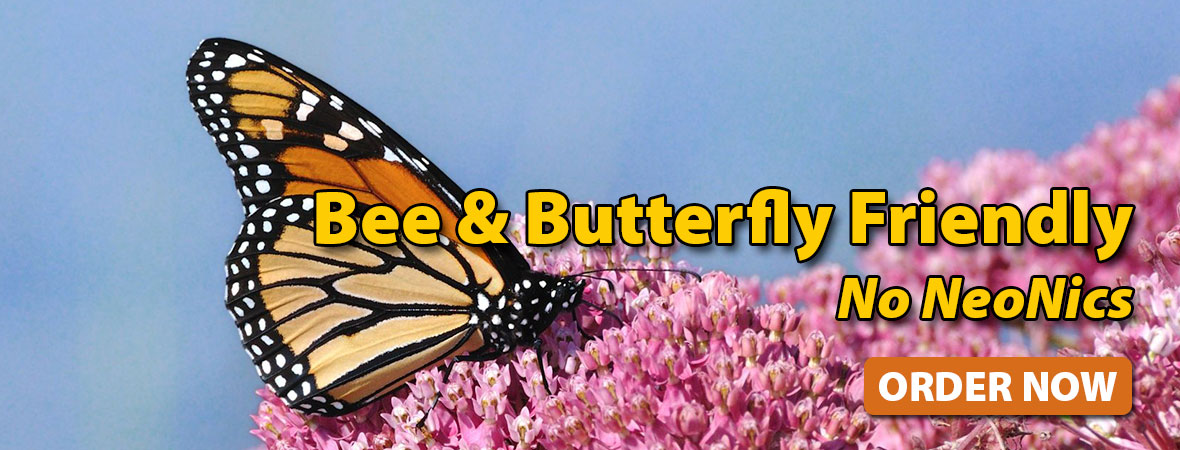 Bee & Butterfly Friendly