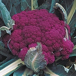 Cauliflower - Purple