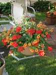 Hanging Basket Combo - Sunset Blaze