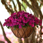 Impatiens - Beacon Violet