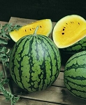 Watermelon - Yellow -Petite - Organic