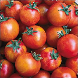 Heirloom Tomatoes - Isis Candy Cherry