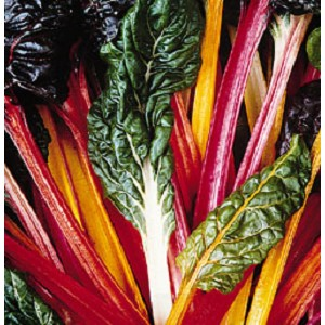 Chard, Swiss - Bright Lights - Organic