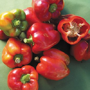Heirloom Pepper - Sweet Bull Nose Bell - 18
